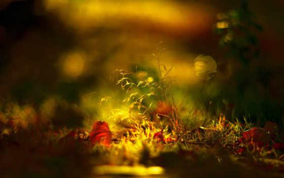 лист, свет, трава, осень, листва, разных, листики,
