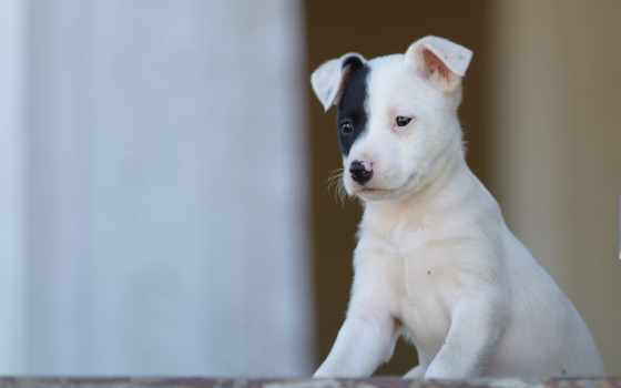 baby, собака, animals, щенок, zhivotnye, dogs, alcatel, страница,