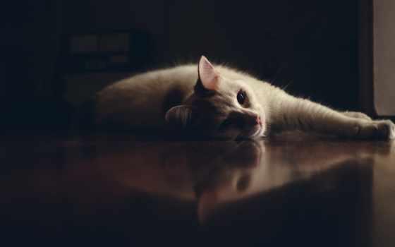 ,, усы, кошка, felidae, muridae, песчанка, темнота, морда