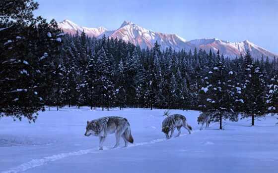 волк, winter, природа, овцы, animal, cry, tune, tim, насекомое, balance