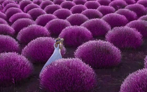 lavender, поле, turkey, аватар, isparta, twitter, altan, mensagen, фото, большой, dream