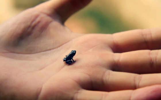лягушка, hand, makro, ладонь, кисть, brsten, frosch,
