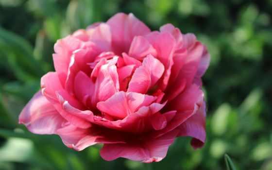 Цветы 37313