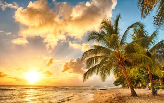 praia, мар, palmeiras, tropical, oceano, parede, papéis, paraíso, сол, por,