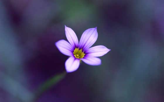 цветы, макро, размытость
