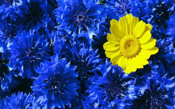 blue, yellow, контрастность