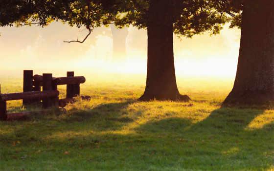 природа, свет, капли, трава, осень, роса, утро,
