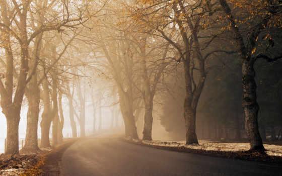 дорога, утро, асфальт