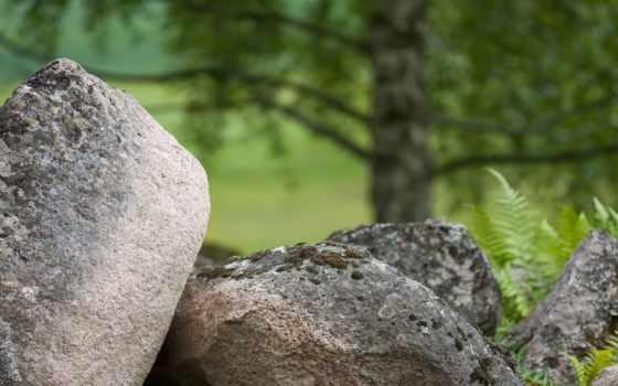 ,камни, мох, береза,