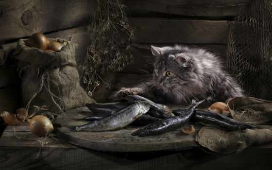 котом, натюрморт, натюрморты, кота, кот, очень, павловская, светлана,