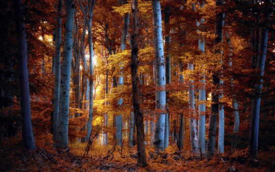 jesen, desktop, pozadine, slike, осень, free, лес, sfondi,