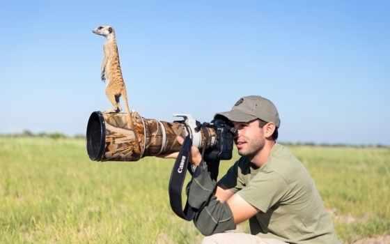 фотограф, животные, photography, lucas, burrard, сурикаты, will, pictures, фотограф,