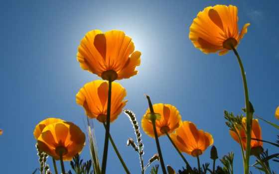 cvety, chuck, stems, flowers, twitter, оригами,
