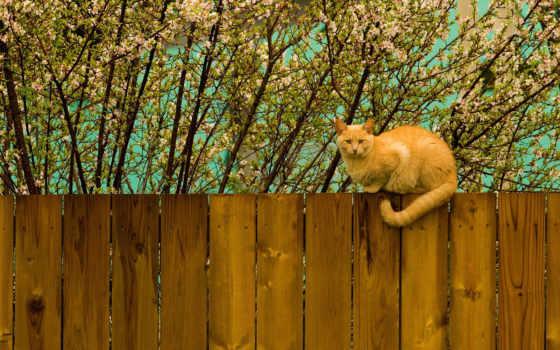 кот, стена, red