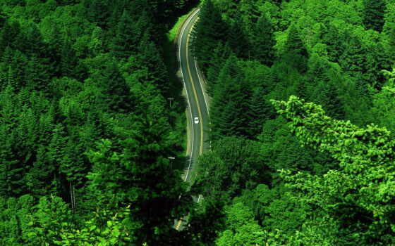 дорога, лес Фон № 1688 разрешение 1920x1080