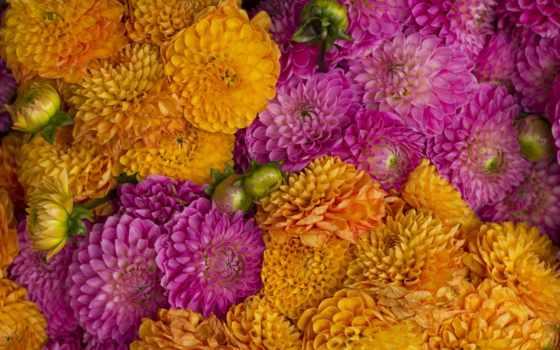 Цветы 20083