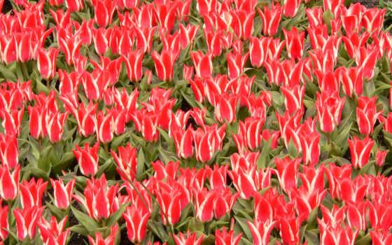 цветы, необычные, взгляд