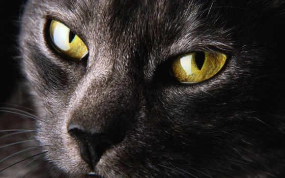 глаза, кошачьи, гетерохромия
