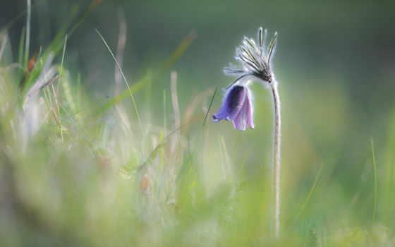 природа, jaro