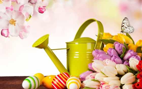 easter, tulips, eggs, изображение, free, flowers, holidays, фото, фон,