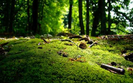 красивые, высококачествен, мох, bowen, горах, закат, солнца, австралия,