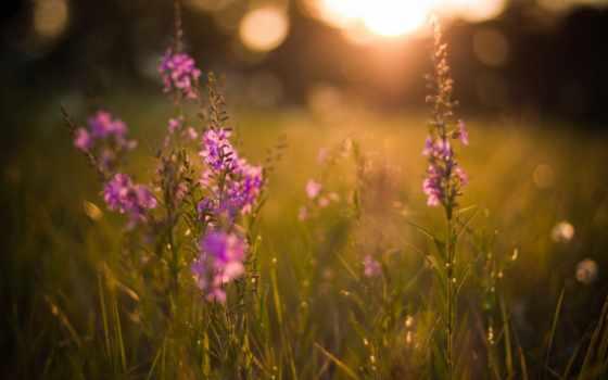 растения, природа, цветы, свет, вечер, rays, поляна, травы, закат, summer, блики,