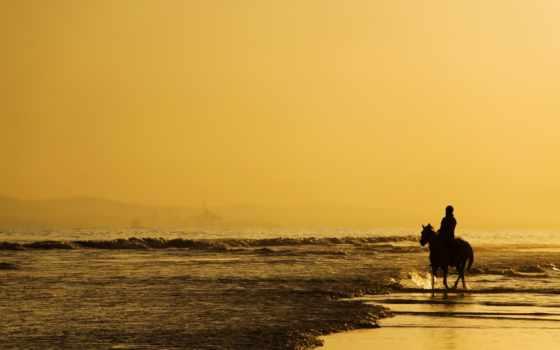 лошади, кони, лошадь, zhivotnye,