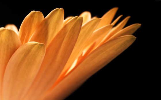 хороший, цветы, ночь, deviantart, friends, schloss, flickr, лепестки, albrechtsberg,