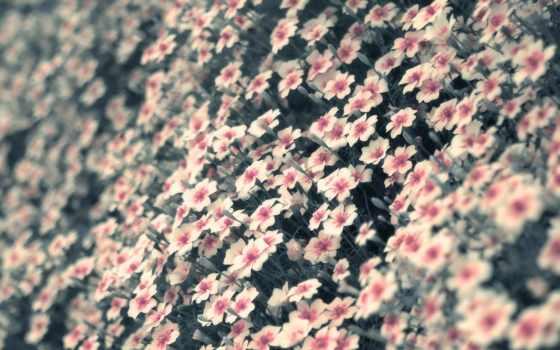 железная, красивые, white, cvety, дорога, закат, цветы, макро, микс,