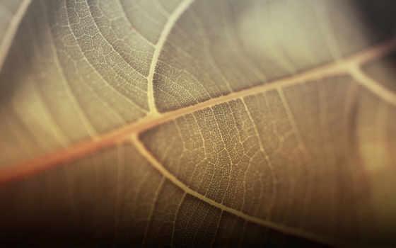 лист, прожилки, макро, зелёный,