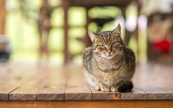 кот, сова, rate, abyss, доска, смотреть, toggle