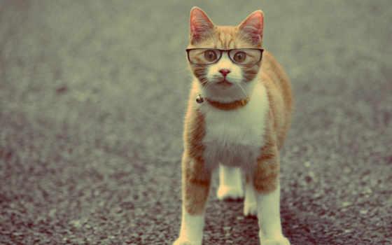 кот, очках, животные
