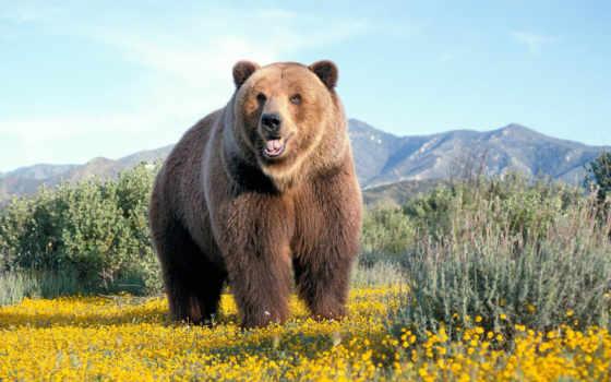 медведь, zhivotnye, медведи Фон № 99782 разрешение 1920x1440