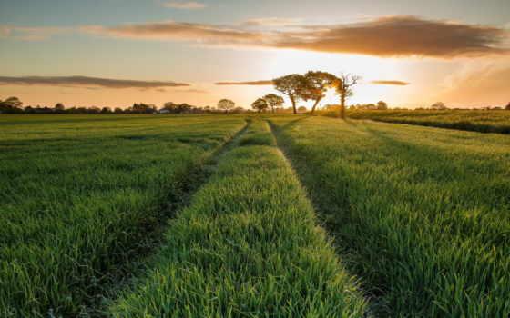 трава, поле, природа