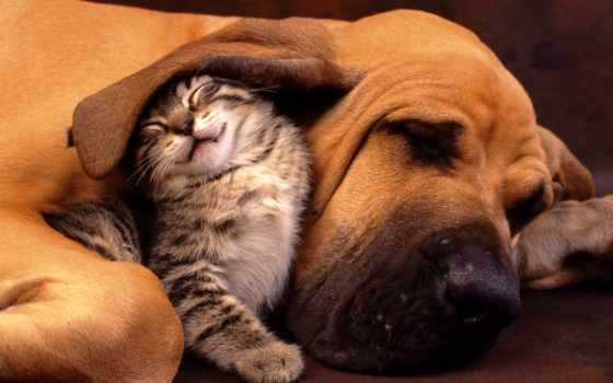 животных, дружба, людей