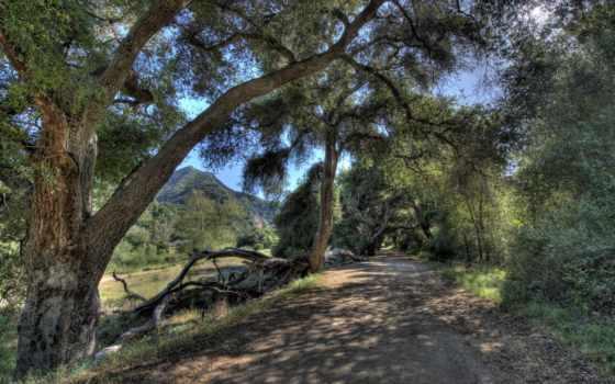 malibu, usa, hdr, изображение, природа, california, ствол, trees, дерева,