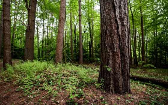 дерево, лес, природа