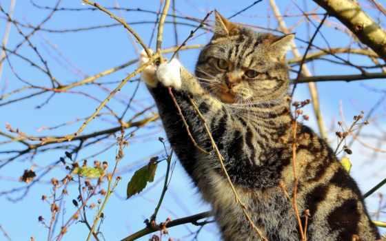 сидит, кот, кошки, zhivotnye, ветки, one, click, дерево, теме, котенок, browse,