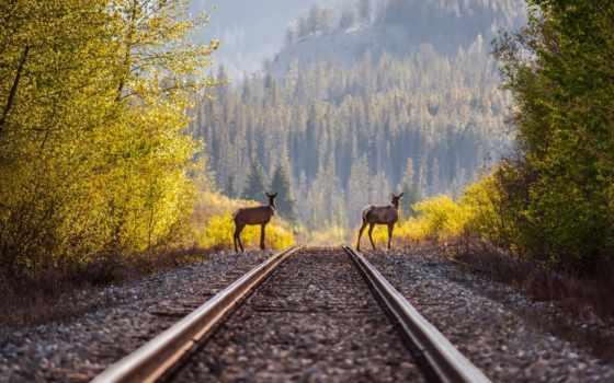 дорога, железная, локомотив, winter, рельсы, hdr, поезд, небо,
