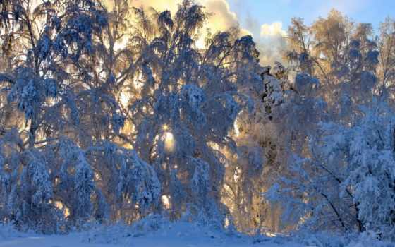 природа, trees, года, winter, трава, березы, summer, хакасия, season, картинку, time,