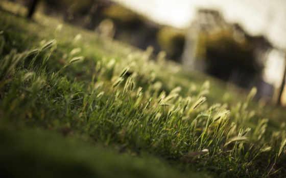 макро, трава, зелёный,