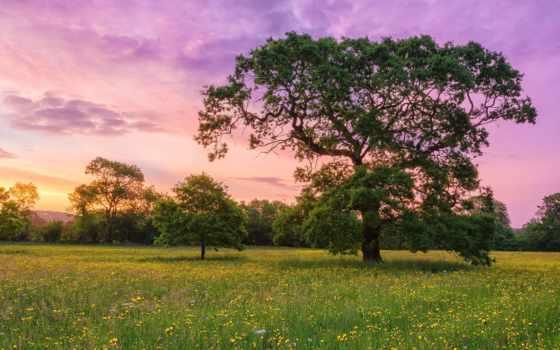 природа, природы, телефон, страница, уголками, naturaleza, прекрасными, цветы,