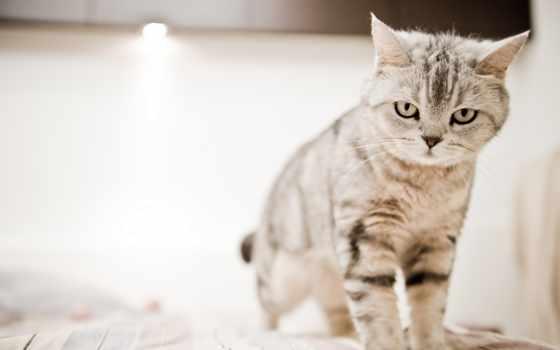 кот, desktop, angry, котенок, фон, free,