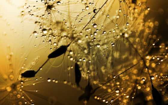 frieza, дождя, разрешением, rainy,