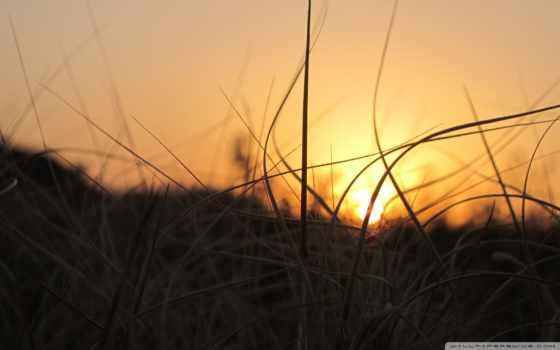 трава, sunlight, sun, закат, dimension