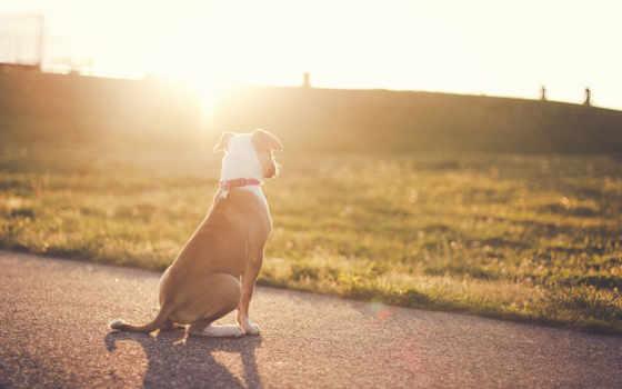 dog Фон № 15615 разрешение 2560x1600