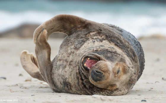 море, тюлень, радость