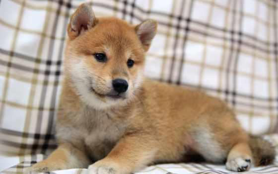 собаки, собака, щенок Фон № 174773 разрешение 1920x1080