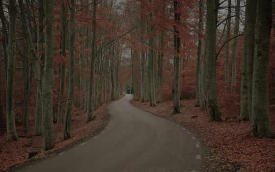 хмурый, осень, день, природа, лес, дерево, дорога, sweden, листва, роберт,