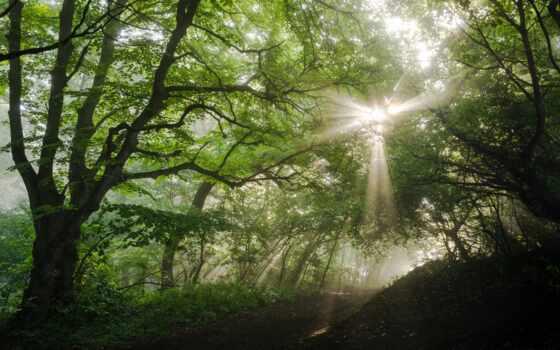 природа, фон, fore, зелёный, во, лес, дерево, red, качество, гора, ноутбук